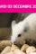 agenda : bien être des animaux dans un projet