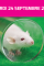agenda : les perceptions des animaux